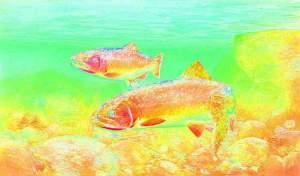 1024px-Trout_cutthroat_fish_oncorhynchus_clarkii_clarkii_pe_pe